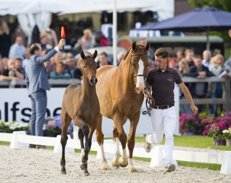 Top foals in Exclusive Collection at 2019 EDS-Prinsenstad Auction