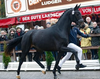 Foundation x San Amour at the 2019 Oldenburg Stallion Licensing, the typical meat and fries stand in the background :: Photo © Petra Kerschbaum