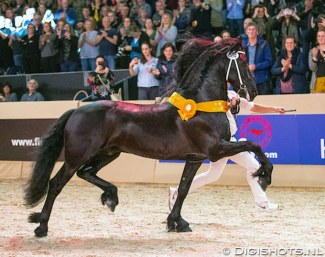Matthys 504, Champion of the 2020 Friesian Stallion Licensing :: Photo © Digishots