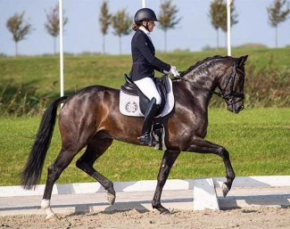 Kingston (by Apache x Diamond Hit) - clear talent for Grand Prix