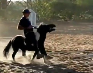 Brazilian Equestrian Federation will not impose sanctions for animal abuse that takes place at home
