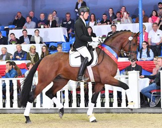 Fynch Hatton OLD by Formel Eins, Saddle licensing winner, price highlight at the 2019 Spring Elite Auction and reigning Bundeschampion.